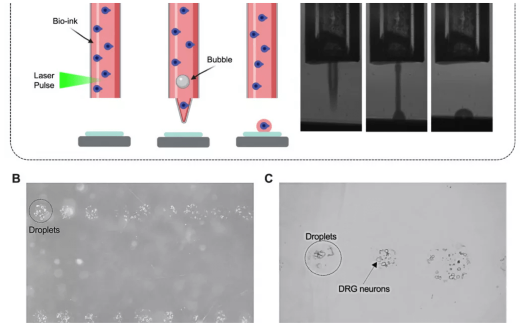 فرآیند چاپ زیستی با پرینتر سه بعدی